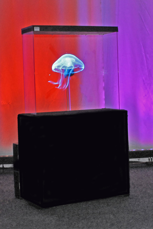 Hyra hologram till mässa och event. Hologram fläkt Vepastativ med blå manet med färgad bakgrund. Hologramdisplay med LED fläkt