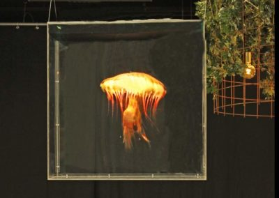 Hologram hängande gul manet Smart 3D Holo. Hologram fläkt